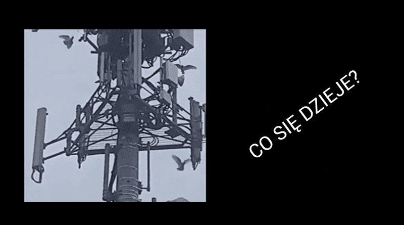 Atak na anteny 5G? Ptaki mądrzejsze niż świat?